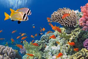 Snorkling i verdensklasse - Sharm el Sheikh -Egypten - Amisol