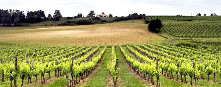 Vinmarker i Cognacsområdet