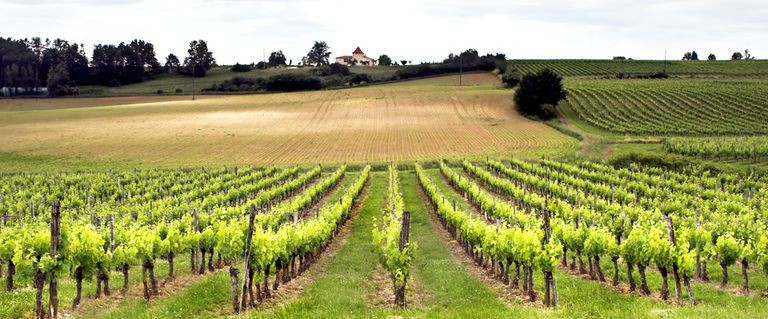 Vinmarker i Bordeaux