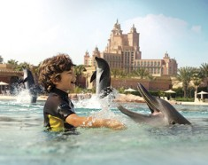 Simma med delfiner i Dubai