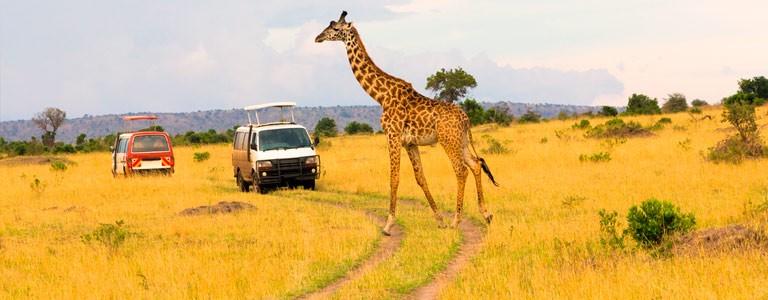 Masai Mara, Nairobi, Kenya