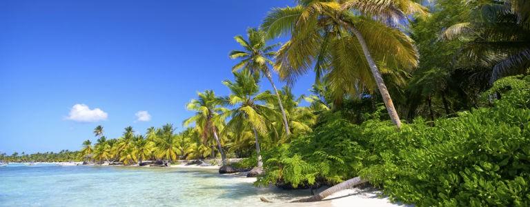 Dominikanska republiken - Strand med palmer 768x300