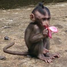 rsz_monkeyforestubud