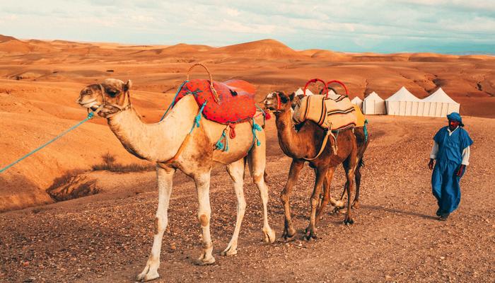 marokko-kameler